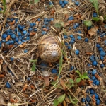MINIATURE_ESCARGOT